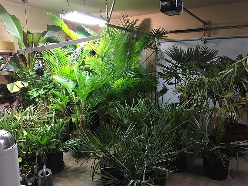 növények teleltetése