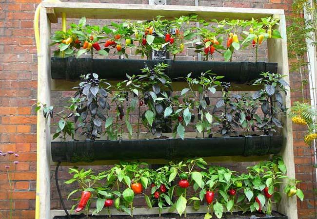 növényes állványok