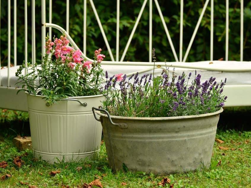 növények újrahasznosított konténerben