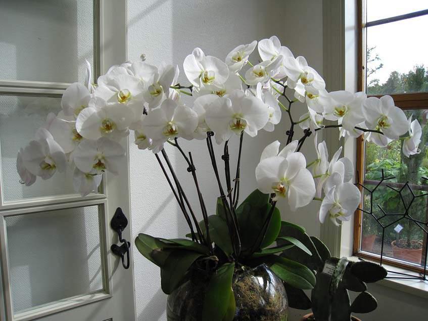 lepke orchidea ablakban