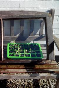 palánták védelem ablaktábla mögött