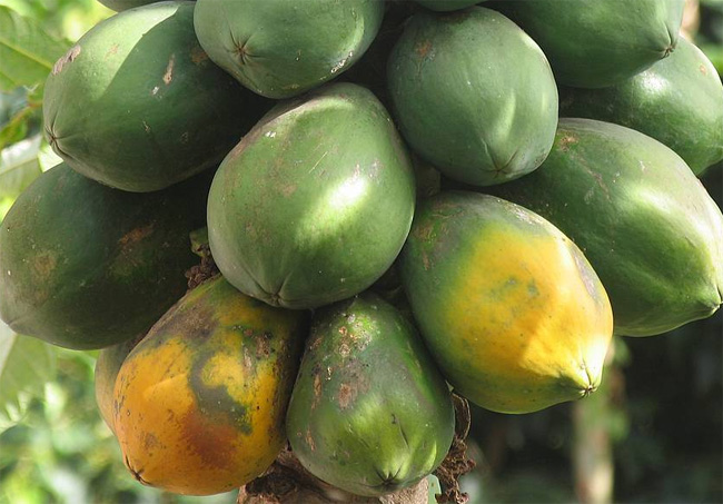 papaja gyümölcsök
