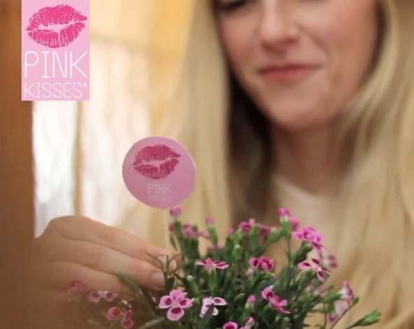 'Pink Kisses' szegfű