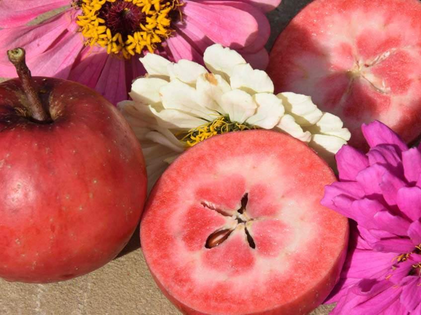 Red Love almák