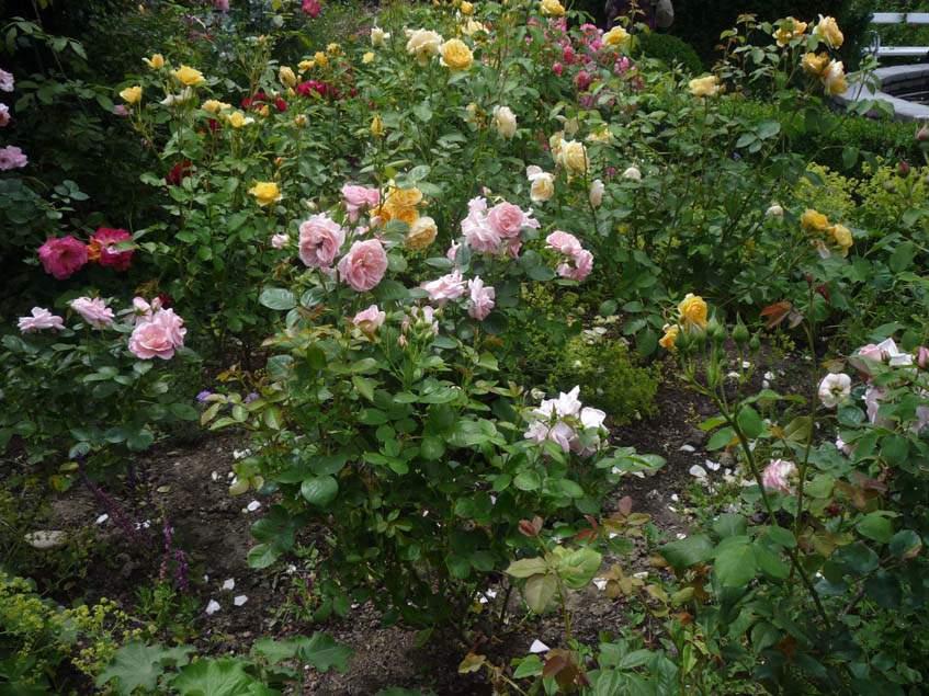 rózsakert