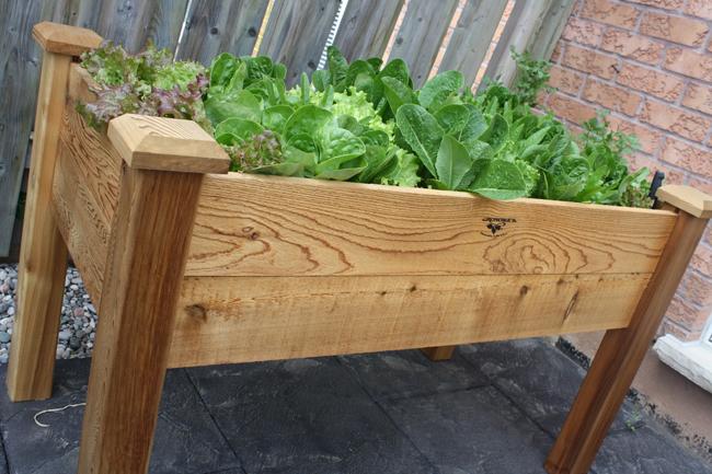 saláta asztal