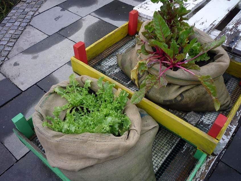 saláta zsákban