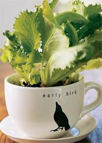 saláta csészében