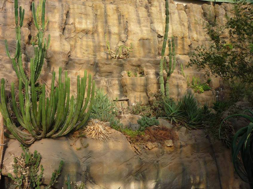a schönbrunni sivatagi haz
