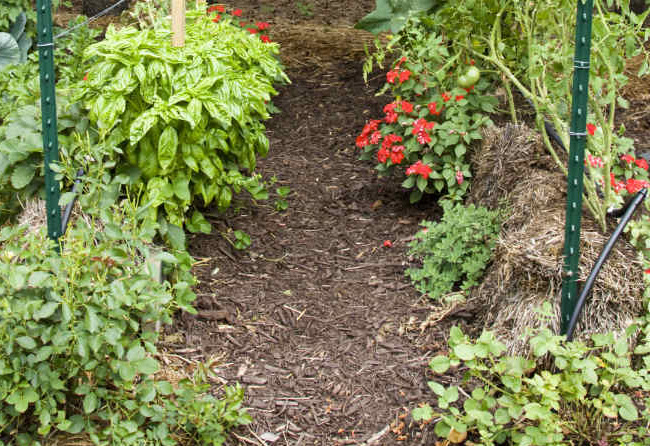 szalmabála kert
