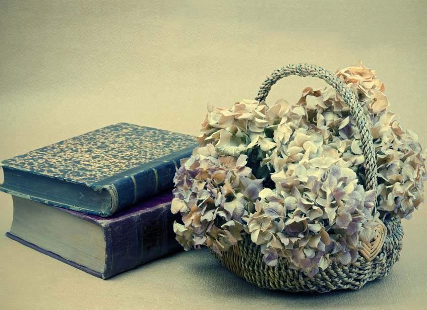 száritott hortenziavirág