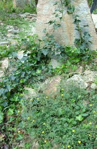 szilkas talaj természetes növényboritása