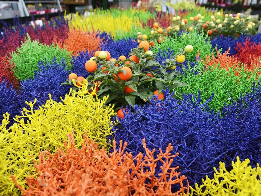 színezett párnacserjék