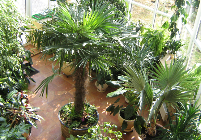 szobanövények télikertben
