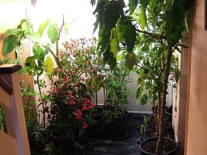 szobanövények elhelyezése
