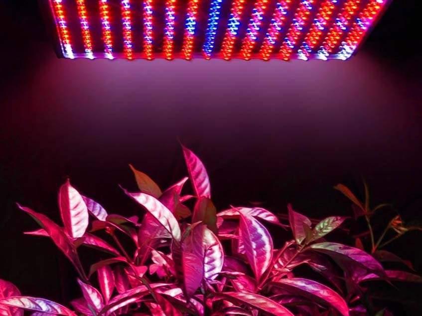 szobanövények megvilágítása