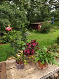 szobanövények nyaraltatása