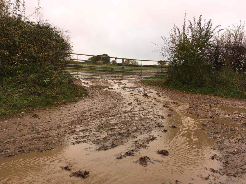 talaj eső után