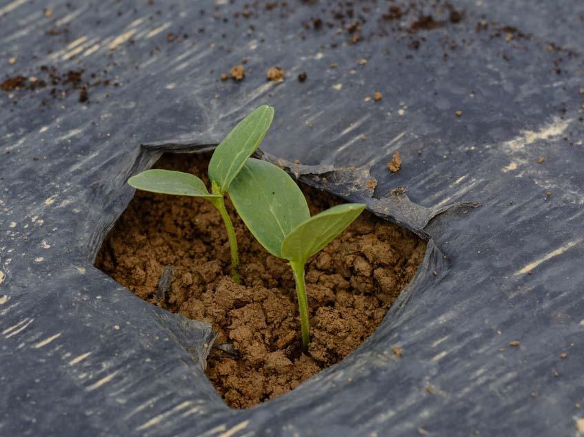 talajtakaró fólia