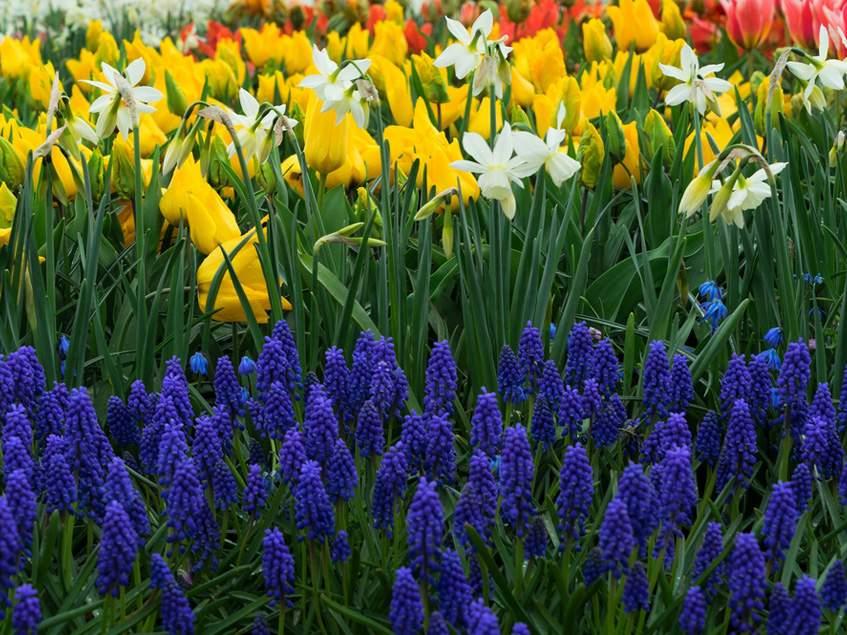 tavaszi hagymások