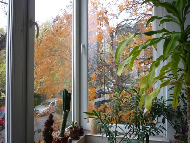 szobanövények teleltetése