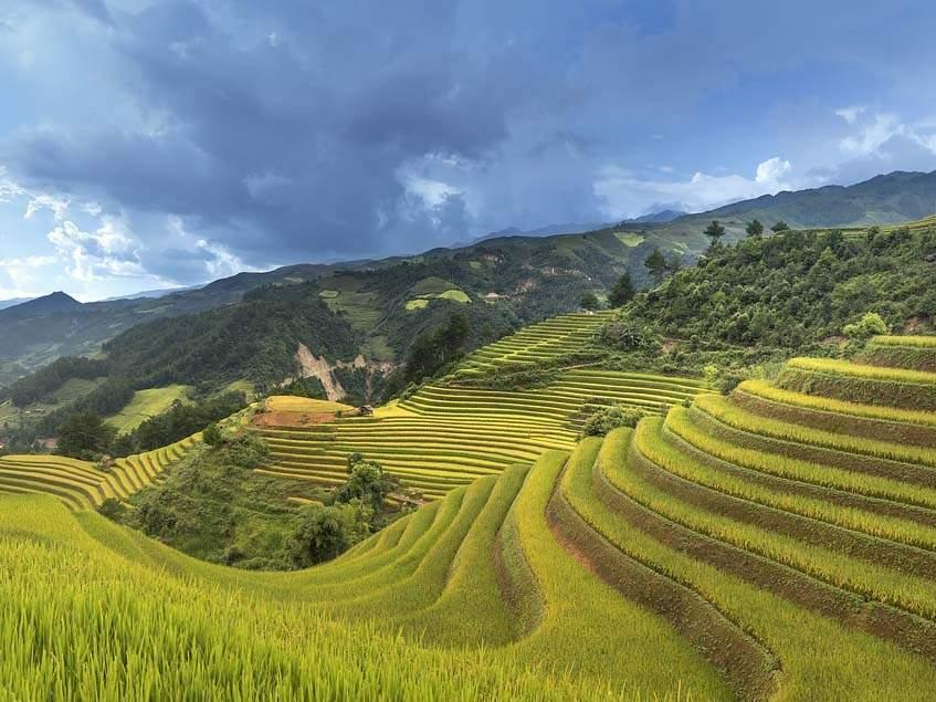 teraszos rizstermesztés Vietnamban