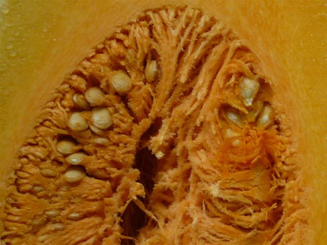 sütőtök félbe vágott termése