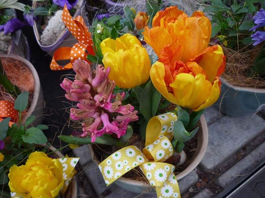 tulipán és jácint