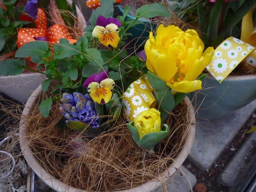 tulipán, jácint, árvácska edényben