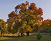 vackor őszi lombszíne