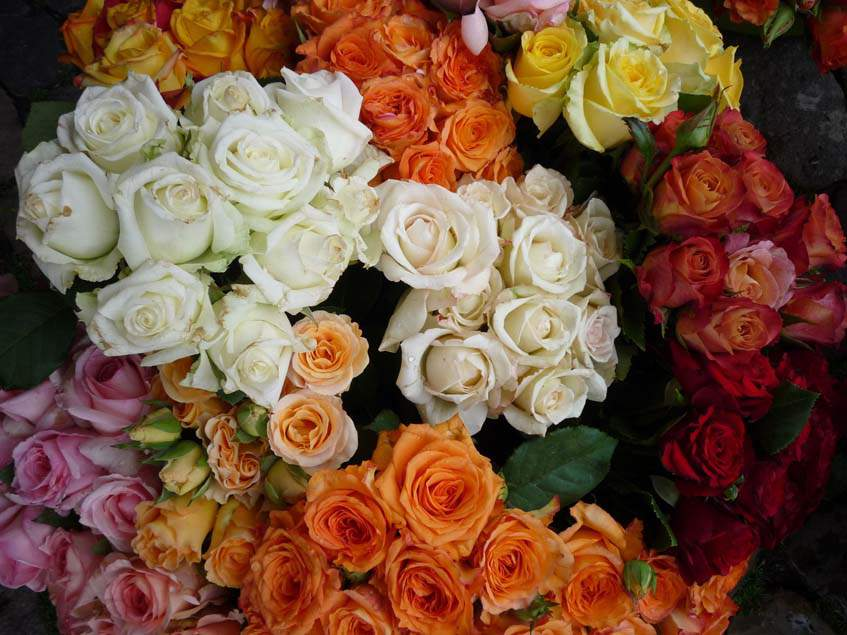 vágott rózsák