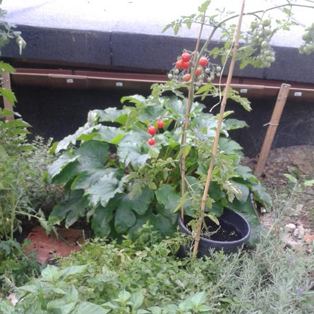 városi kertész