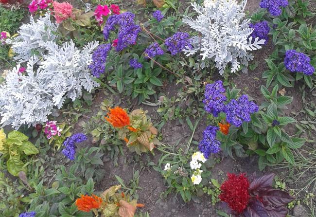 vegyes virágágy