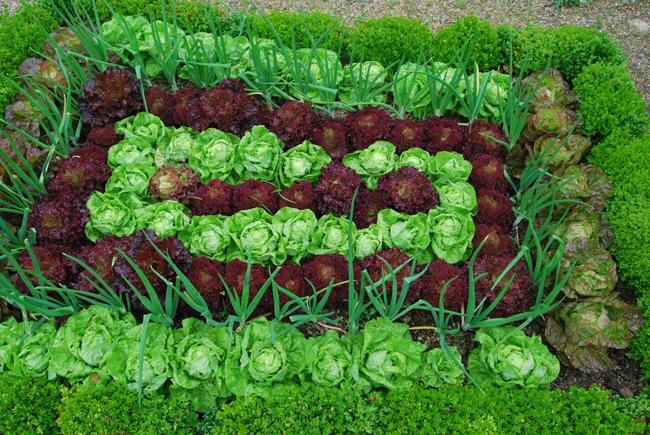 vegyes zöldségágyás
