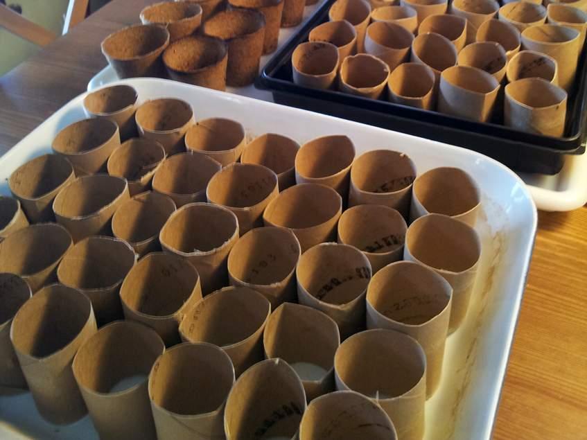 wcpapir gurigából készült palántanevelő edény