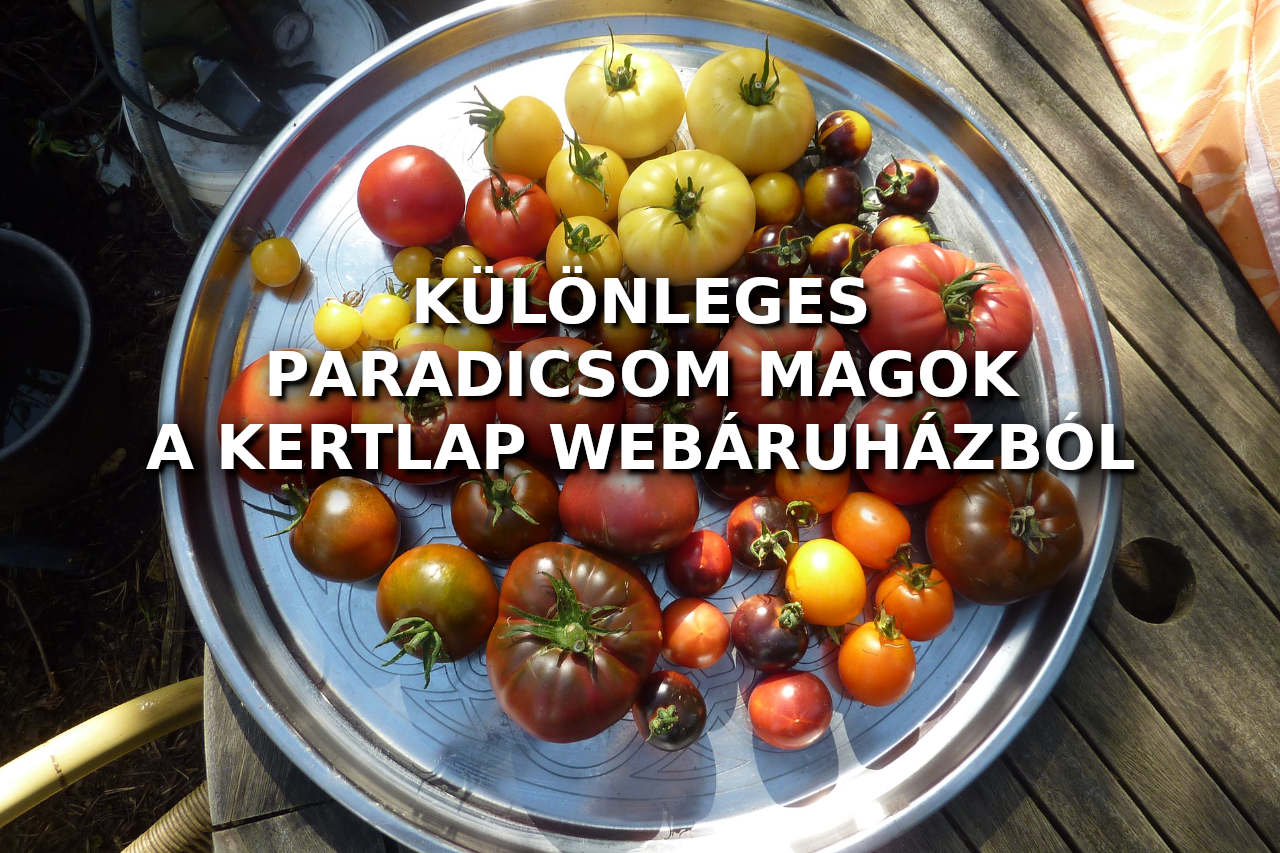 Különleges paprika & paradicsom magok
