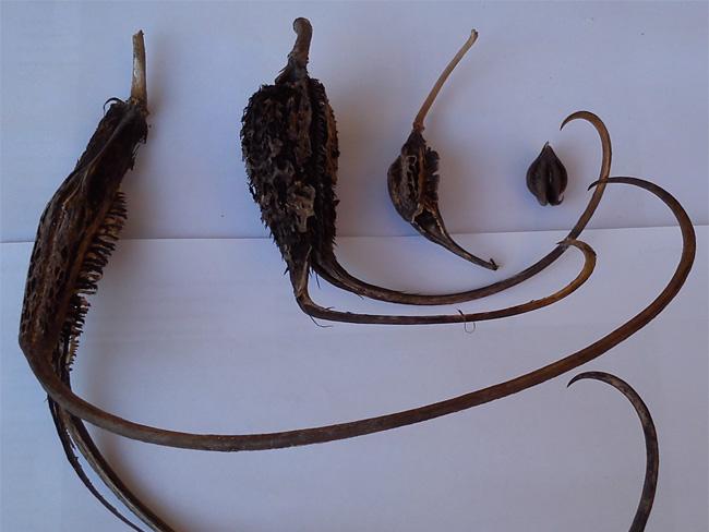 zergeszarv termések