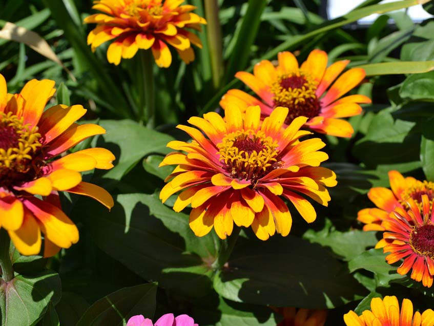 rézvirágok