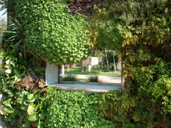 kültéri zöld fal