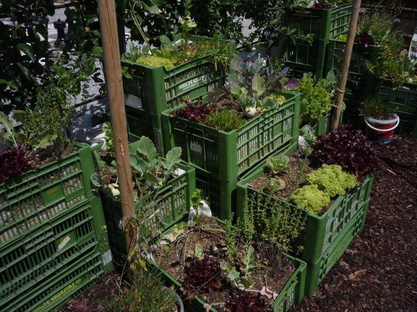 ágyás zöldséges rekeszben