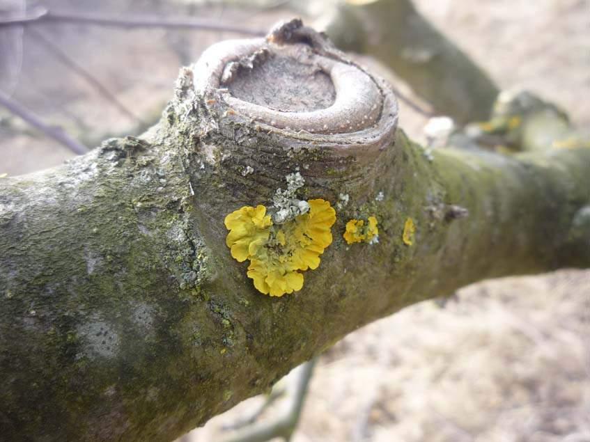 zuzmó a fán